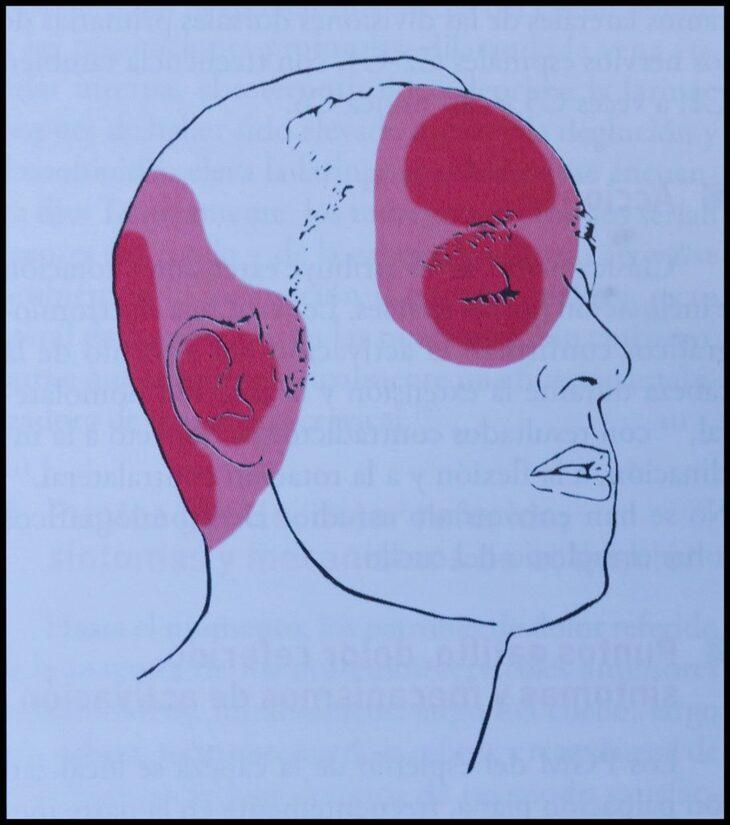 músculo-esplenio-de-la-cabeza